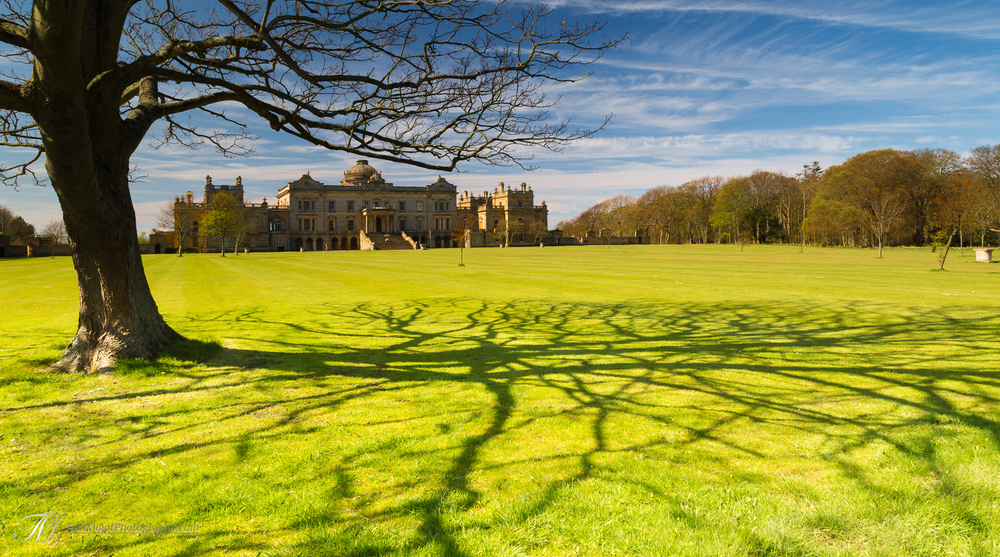 Shadowing tree at Gosford House estate near Longniddry