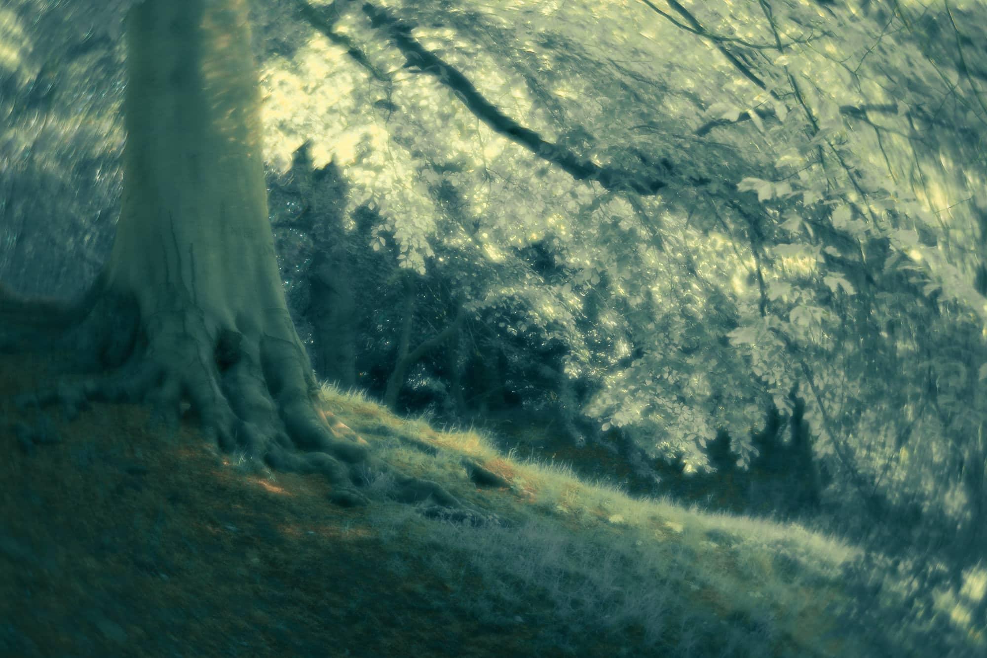 Paysage pris a f4 avec le Daguerreotype Achromat de chez Lomography